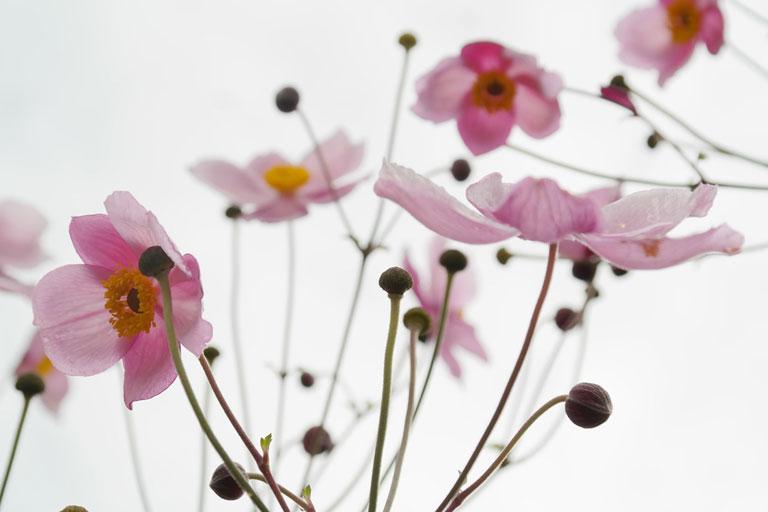 slide_flowers.jpg